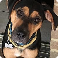 Adopt A Pet :: Cami - Allentown, PA