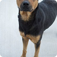Adopt A Pet :: Ruby - Prince George, VA
