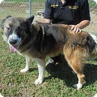 Adopt A Pet :: Boomer - Springfield, TN