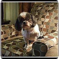 Adopt A Pet :: Winchester - Greensboro, NC