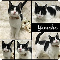 Adopt A Pet :: Yamaha - Joliet, IL