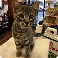 Adopt A Pet :: Lincoln - Turnersville, NJ