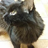 Adopt A Pet :: Poseidon *Petsmart GB* - Appleton, WI