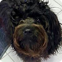 Adopt A Pet :: I'M ADOPTED Winston - Oswego, IL