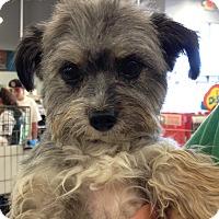Adopt A Pet :: Osa - Las Vegas, NV