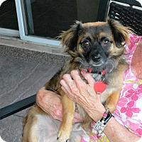 Adopt A Pet :: Sammy Delight - Phoenix, AZ