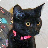 Adopt A Pet :: Moana - Wildomar, CA