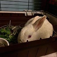 Adopt A Pet :: Cooper - Portland, ME
