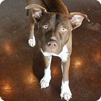 Adopt A Pet :: Kia - San Antonio, TX