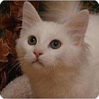 Adopt A Pet :: Harold - Mobile, AL