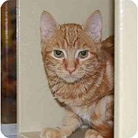 Adopt A Pet :: Zack - Modesto, CA
