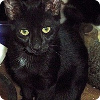 Adopt A Pet :: Provolone - Secaucus, NJ