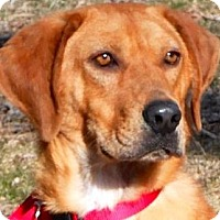 Adopt A Pet :: BO - Wakefield, RI