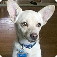 Adopt A Pet :: Wiley - Seattle, WA