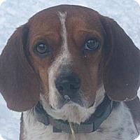 Adopt A Pet :: Bobo - Jacksonville, FL