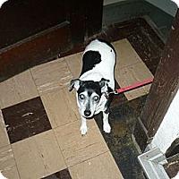 Adopt A Pet :: KiAH - Wisconsin Dells, WI