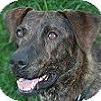 Adopt A Pet :: Macy Lou - Hamilton, ON