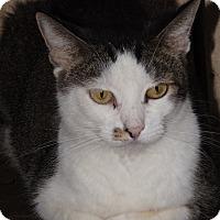 Adopt A Pet :: Cassy - Mesa, AZ