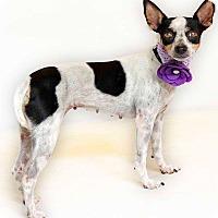 Adopt A Pet :: Shelby - Orlando, FL