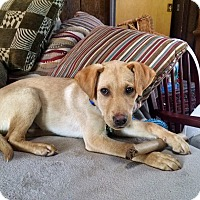 Adopt A Pet :: Camren - in Maine - kennebunkport, ME