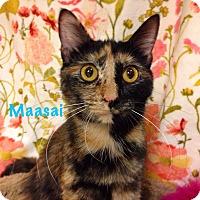 Adopt A Pet :: Maasai - Foothill Ranch, CA