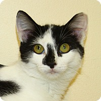 Adopt A Pet :: Charde - North Branford, CT