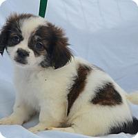 Adopt A Pet :: Azalea - Charlemont, MA