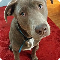 Adopt A Pet :: Jax - Virginia Beach, VA