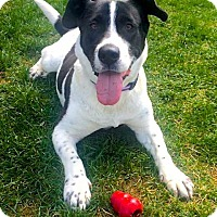 Adopt A Pet :: Blossom - Leonardtown, MD