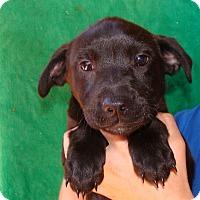 Adopt A Pet :: Rasta - Oviedo, FL