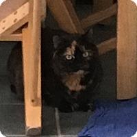 Adopt A Pet :: Foxy & 7-UP - Salem, NH