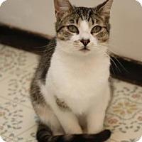 Adopt A Pet :: Oscar - Yucaipa, CA