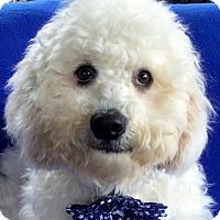 Adopt A Pet :: Eli - Irvine, CA