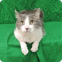 Adopt A Pet :: BABY - Sioux City, IA