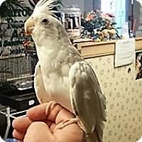 Adopt A Pet :: Frost - Shawnee Mission, KS