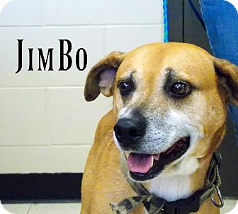 Feist Mix Dog for adoption in Defiance, Ohio - JimBo