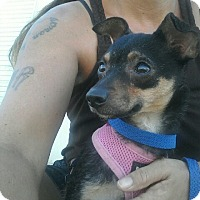 Adopt A Pet :: Mereda - Apache Junction, AZ