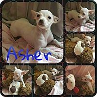 Adopt A Pet :: Asher - Orlando, FL