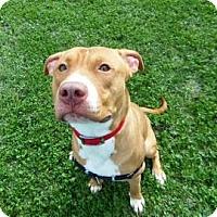 Adopt A Pet :: Spencer - Janesville, WI