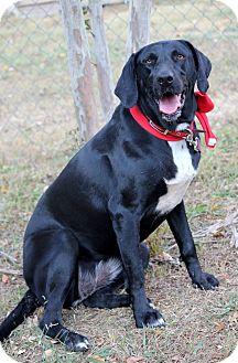 Labrador Retriever Mix Dog for adoption in Dalton, Georgia - Luci