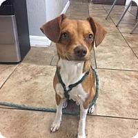 Adopt A Pet :: Alfred - Gainesville, FL