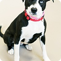 Adopt A Pet :: Denali - Appleton, WI