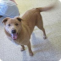 Adopt A Pet :: Jinx - Glenwood, MN