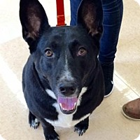 Adopt A Pet :: Radar (courtesy listing peter) - Homestead, FL