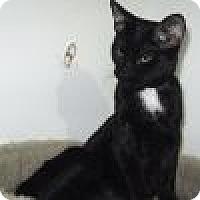 Adopt A Pet :: Nanook - Powell, OH