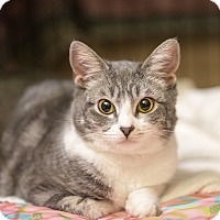 Adopt A Pet :: Fausta - Montclair, CA