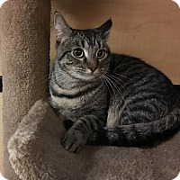Adopt A Pet :: Honey - Riverside, CA