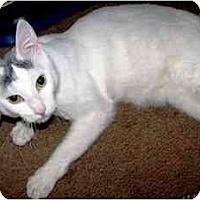 Adopt A Pet :: Noni - Scottsdale, AZ