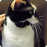 Adopt A Pet :: Callie - Secaucus, NJ
