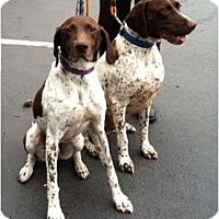 Adopt A Pet :: Frank and Gus - FOSTER NEEDED - Seattle, WA